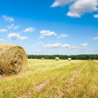 Bales of hay in a large field — Stock Photo