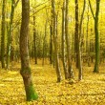 Autumn forest — Stock Photo #14681669