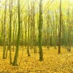 Autumn forest. — Stock Photo #14681671