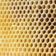 Beer honey in honeycombs. — Stock Photo #15654221