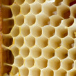Beer honey in honeycombs. — Zdjęcie stockowe