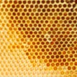 Beer honey in honeycombs. - Stock Photo