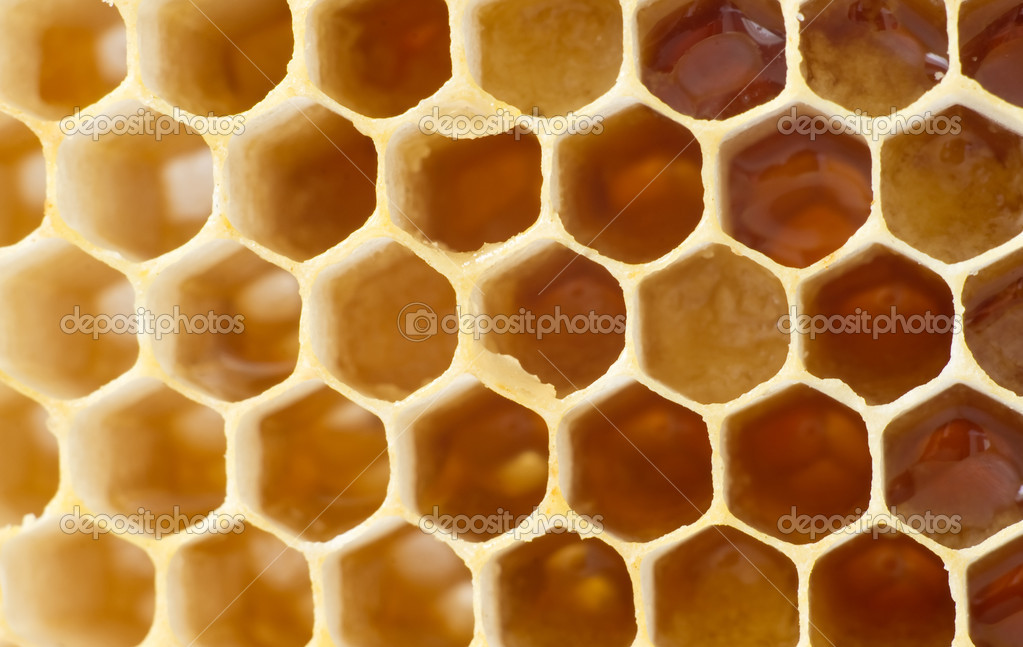 Beer honey in honeycombs. Natural sweet. — Stock Photo #15654219