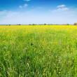Stock Photo: Green summer meadow