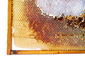 Fresh honey in comb. — Stock Photo