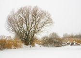 River landscape in winter — Stock Photo
