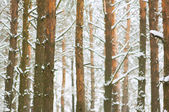 Beautiful winter forest. — Stock Photo