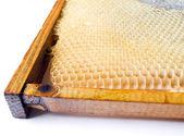 Свежий мед гребень. — Стоковое фото