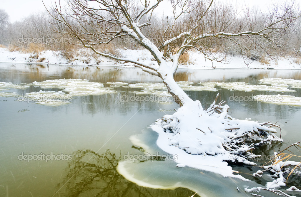 Winter river and trees in winter season — Stock Photo #18746131