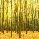 Autumn forest — Stock Photo #19346429