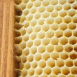 Beer honeycombs — Stock Photo