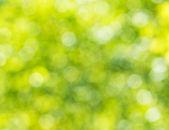 Боке фоне листвы. — Стоковое фото