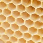 Beer honey in honeycombs. — Stock Photo