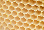 Beer honey in honeycombs. — 图库照片