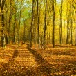 Autumn forest — Stock Photo #21893873