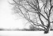зимний сезон — Стоковое фото