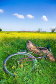 Bicycle partially hidden by tall grass — Stock Photo
