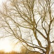 Tree in winter season. - Stock Photo