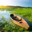 Boat in a high cane — Stock Photo