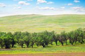 Apple trees on meadows — Stock Photo