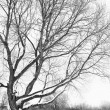 Stock Photo: Tree in winter season.