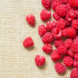 Many red ripe raspberry fruit — Stock Photo