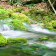 River deep in mountain forest. — Stock Photo