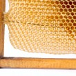 Beer honey in honeycombs. — Stock Photo
