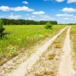 Road throught the summer field near wood.  — Stock Photo