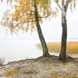 Стоковое фото: Birch on the bank of wood lake.