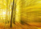 Sluneční paprsky se nalije do podzimního lesa. — Stock fotografie