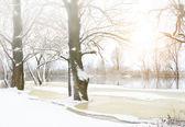 冬季树木覆盖着霜. — 图库照片
