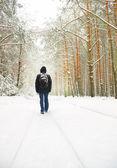 冬季木材 — 图库照片