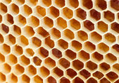 Miele di birra in nido d'ape — Foto Stock