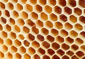 在蜂窝蜂蜜啤酒 — 图库照片