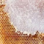 Beer honey in honeycombs — Stock Photo