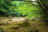 Fiume nel profondo della foresta di montagna — Foto Stock