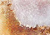 Beer honey in honeycombs — Stock Photo