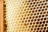 Miele di birra in nido d'ape. — Foto Stock