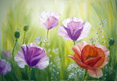 Poppies at the sunrise, oil painting on canvas — Stock Photo