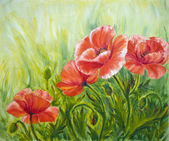 Poppies, , oil painting on canvas — Stock Photo