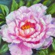 Stock Photo: Peony, oil painting on canvas