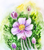 Japanese Anemones flower. Watercolor. — Stock Photo