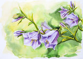 Watercolor painting of the bell flowers — Stock Photo