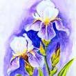 Постер, плакат: Irises watercolor