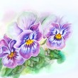 Photo: Tender pansies flowers. Watercolor painting.
