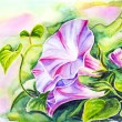 Photo: Convolvulus flowers. Watercolor painting.