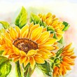 Stock Photo: Sunflowers. Watercolor painting.