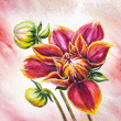 Blooming Dahlia flower, watercolor painting — Stock Photo
