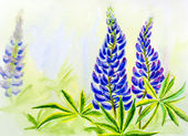 Lupine flowers, watercolor — Stock Photo